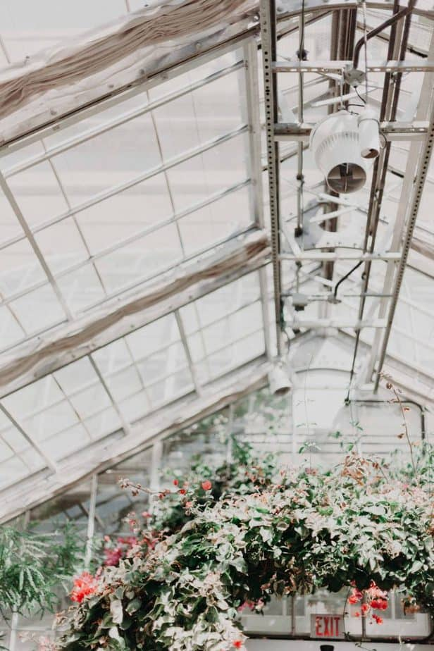 greenhouse grow lights