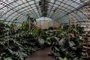 advantages and disadvantages greenhouses