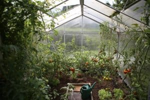 greenhouse pros and cons