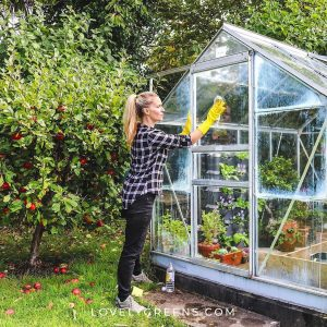 deep clean greenhouse tips