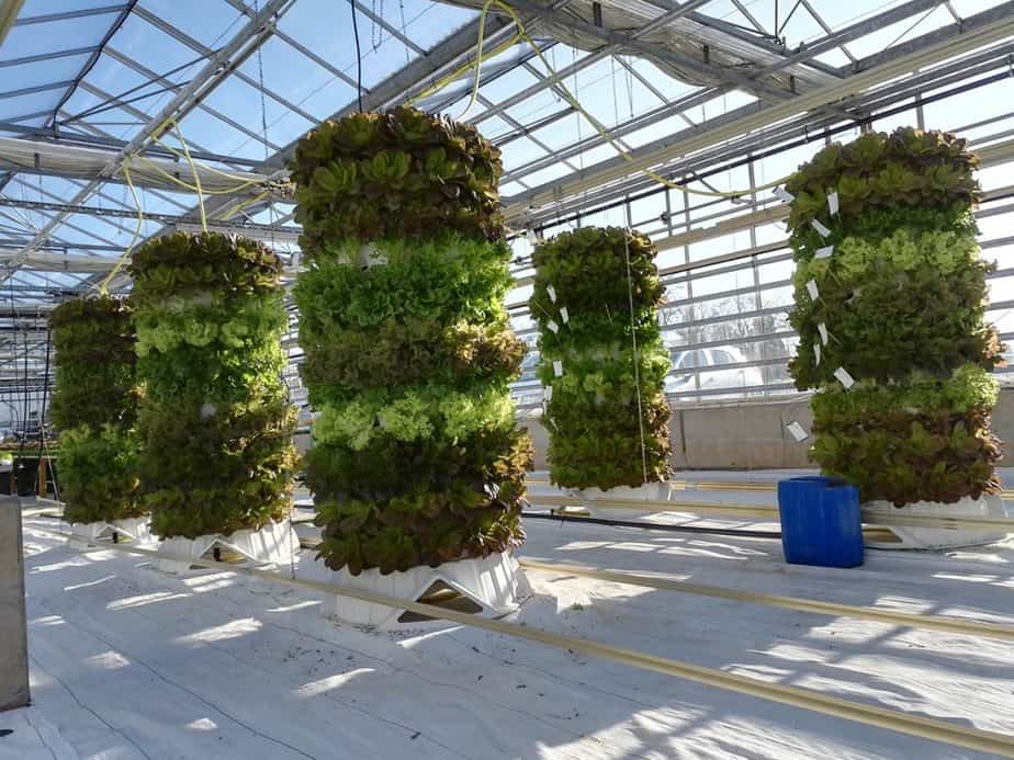 Vertical Gardening in Greenhouses