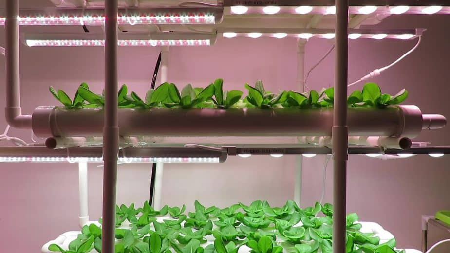 Lighting Vertical Greenhouses