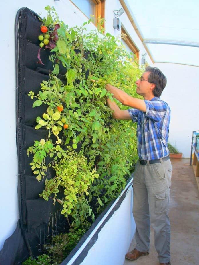 best plants for vertical gardening