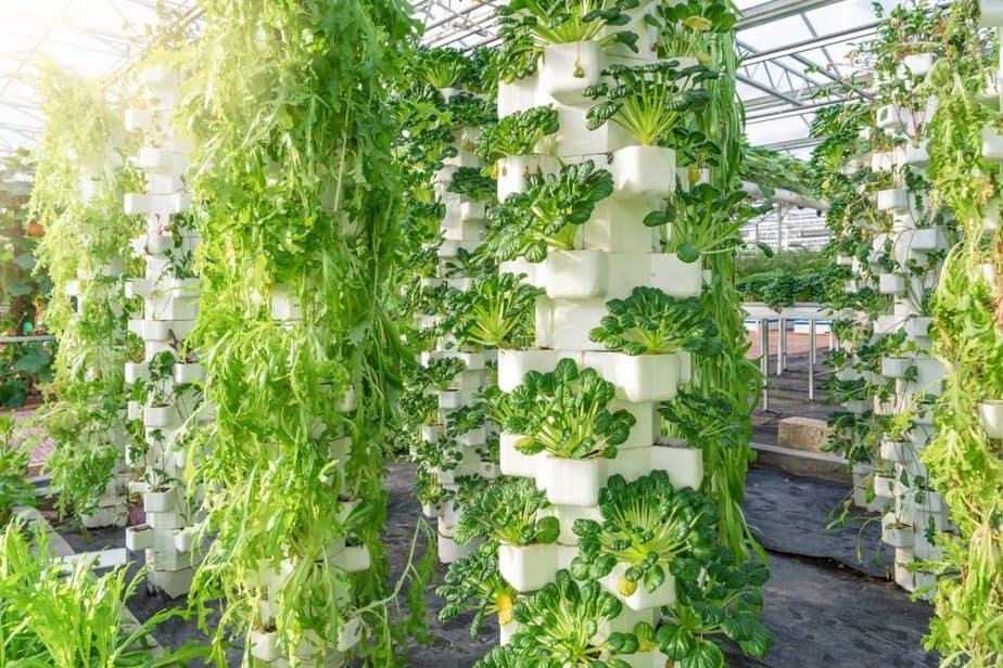 Greenhouse vertical hydroponics