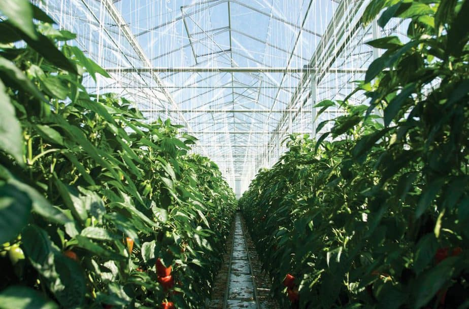 air Greenhouse