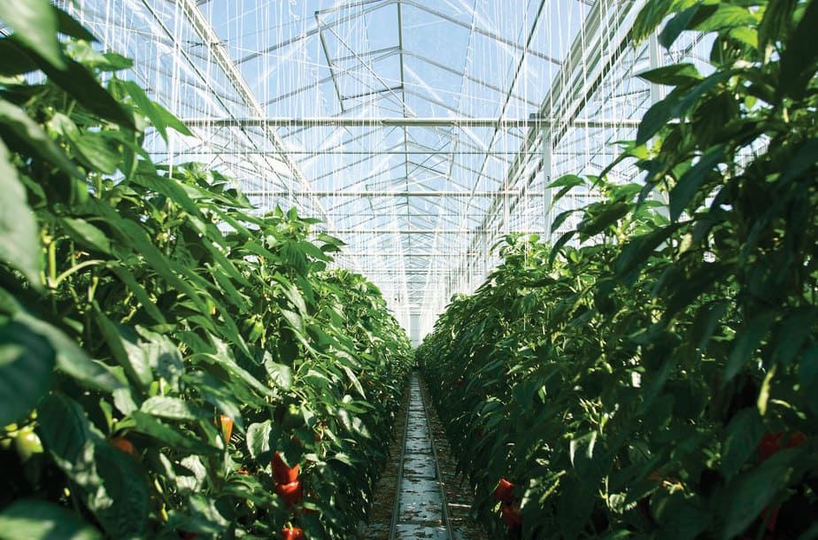 5 Tip for Greenhouse Ventilation and Cooling