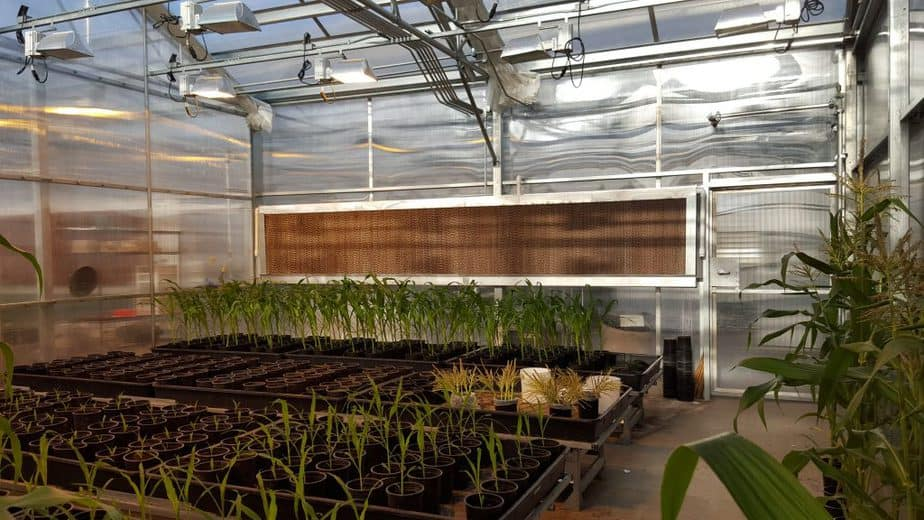 Greenhouse Evaporative Cooler