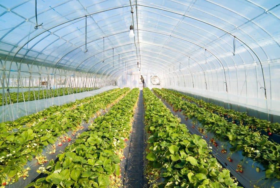 temperature control greenhouse