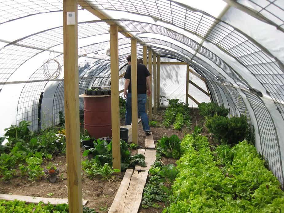 pros backyard greenhouse