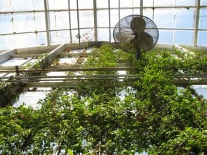 Different Types of Greenhouse Fans – Which is Right for You?