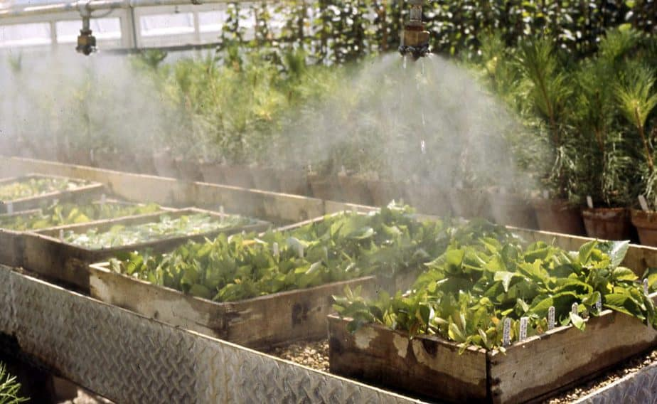 How to Build a Greenhouse Misting System