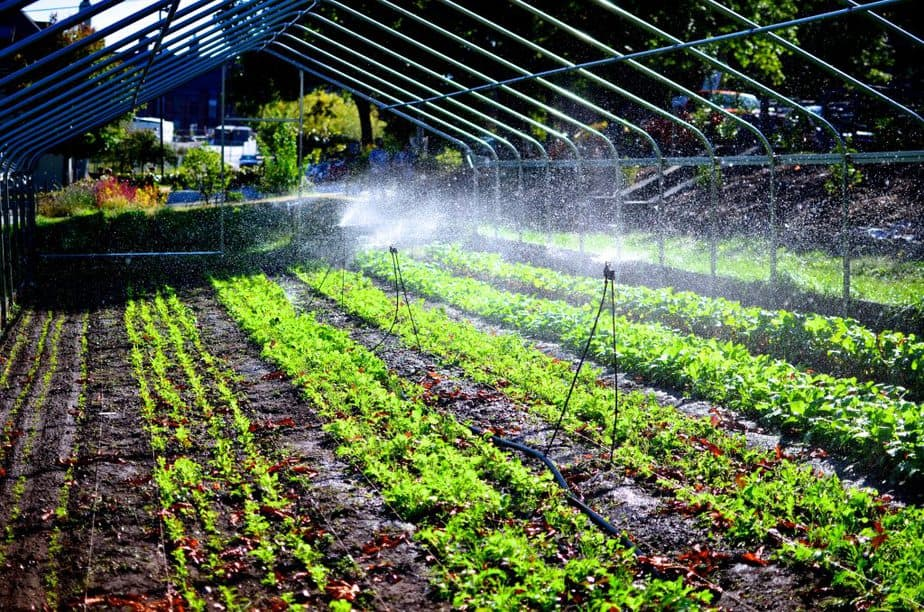 How to build a greenhouse irrigation system