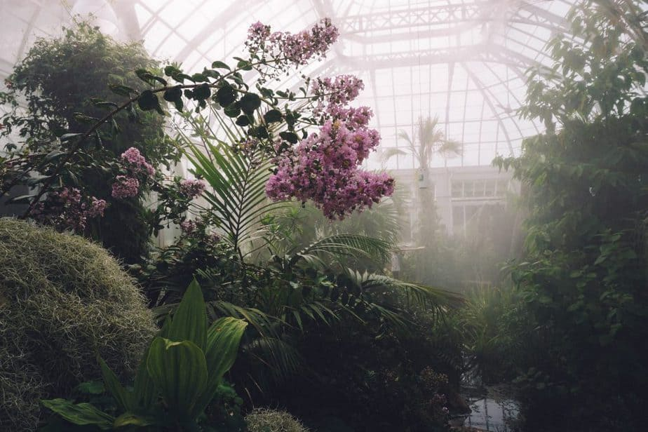 Best Greenhouse Misting Systems