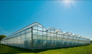 sawtooth greenhouse types