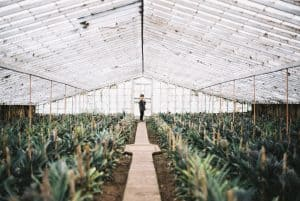 pros and cons of greenhouses