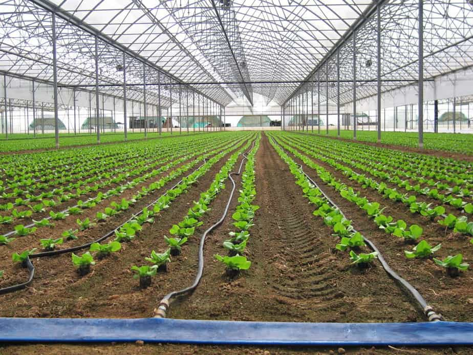 How to Build a Greenhouse Drip Irrigation System