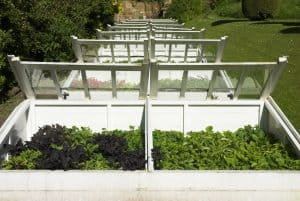 differences between coldframes and greenhouses