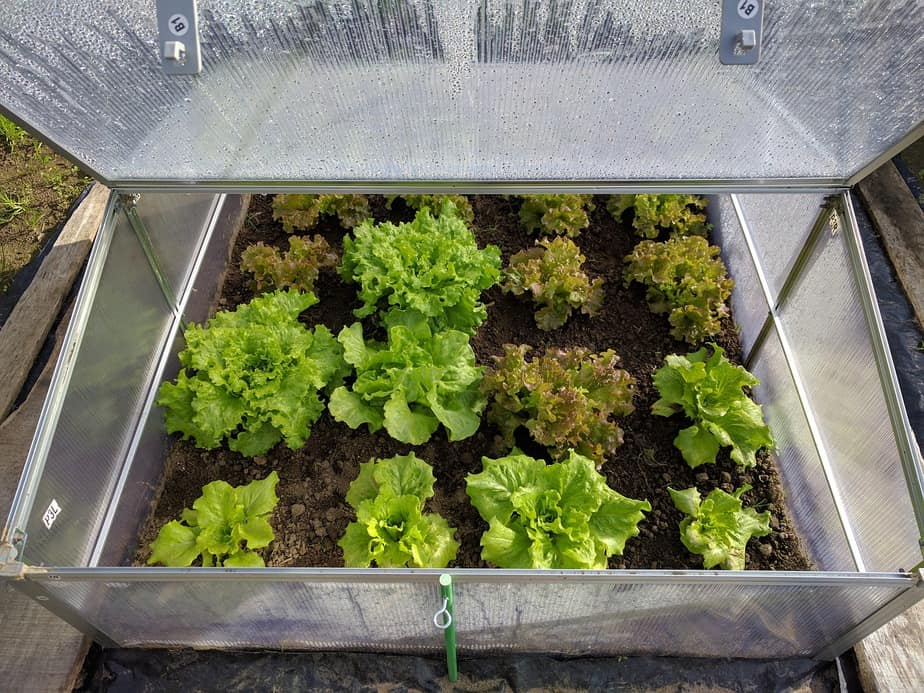 The Difference Between Coldframes and Greenhouses