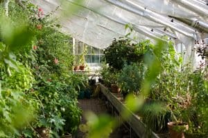 different types of greenhouses to consider