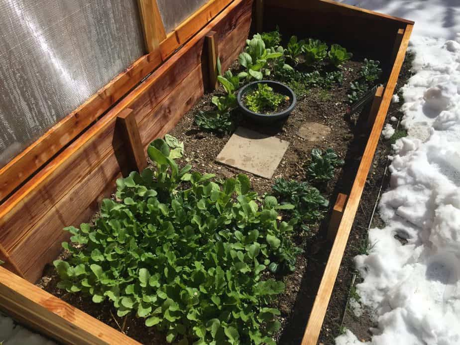 How to Make a DIY Cold Frame Greenhouse