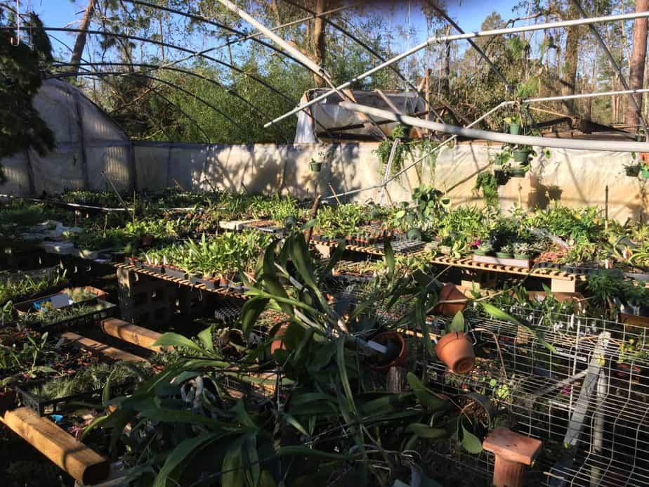 heavy wind greenhouse preperation