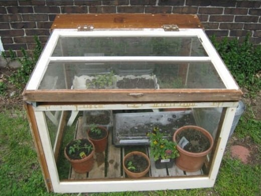 How to Build a Mini Greenhouse with a Fish Tank