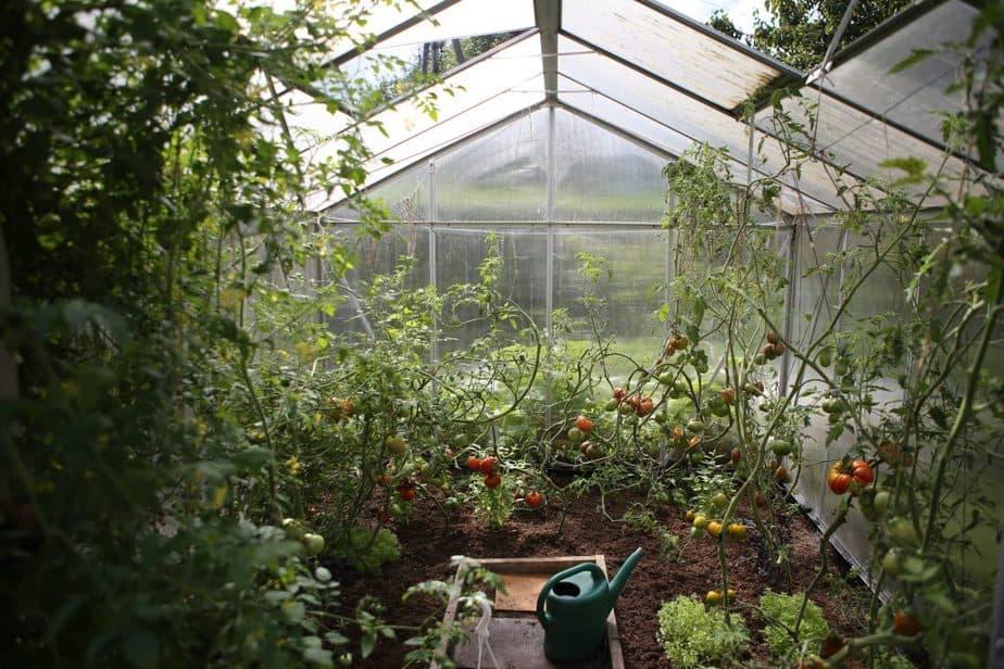 The 3 Best 4x8 Greenhouse Kits