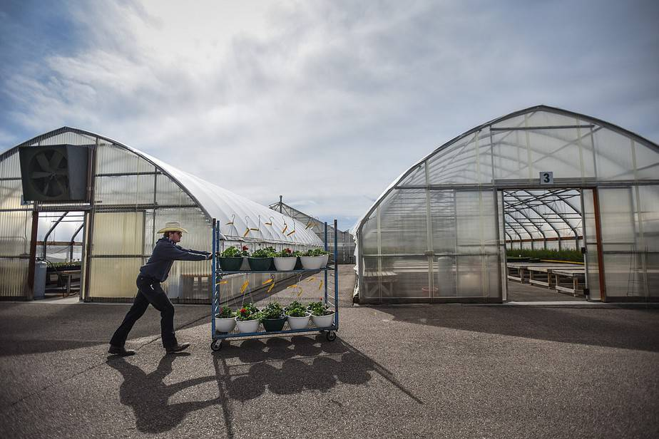 The 3 Best Greenhouse Carts for Easy Gardening