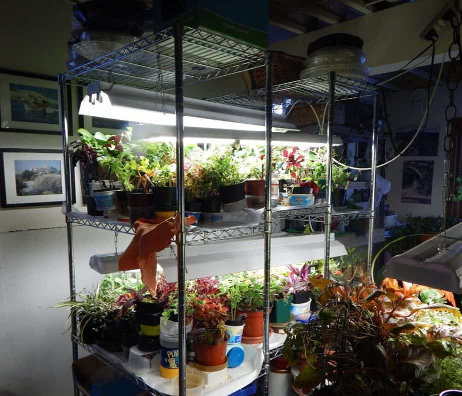 Factors to Consider When Buying a Greenhouse Cart