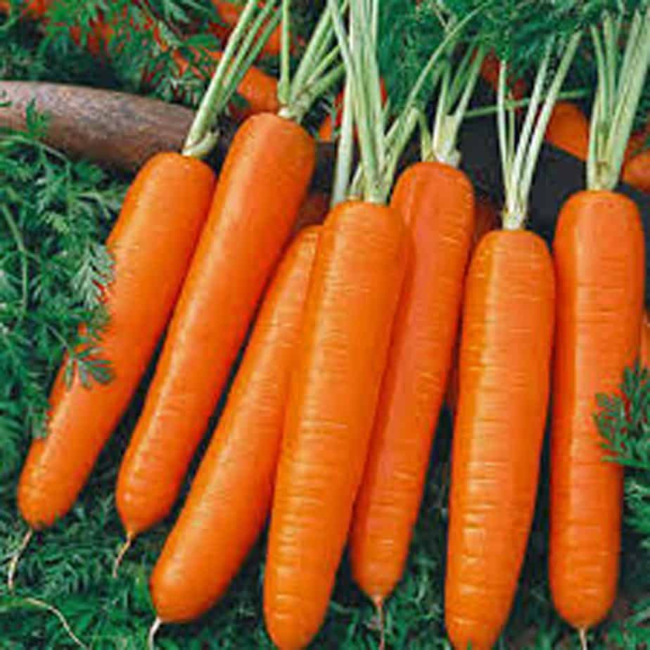 carrot seeds for planting