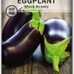 eggplant seeds for planting