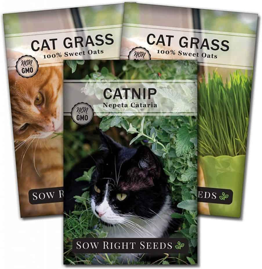 catnip cat grass seeds for planting