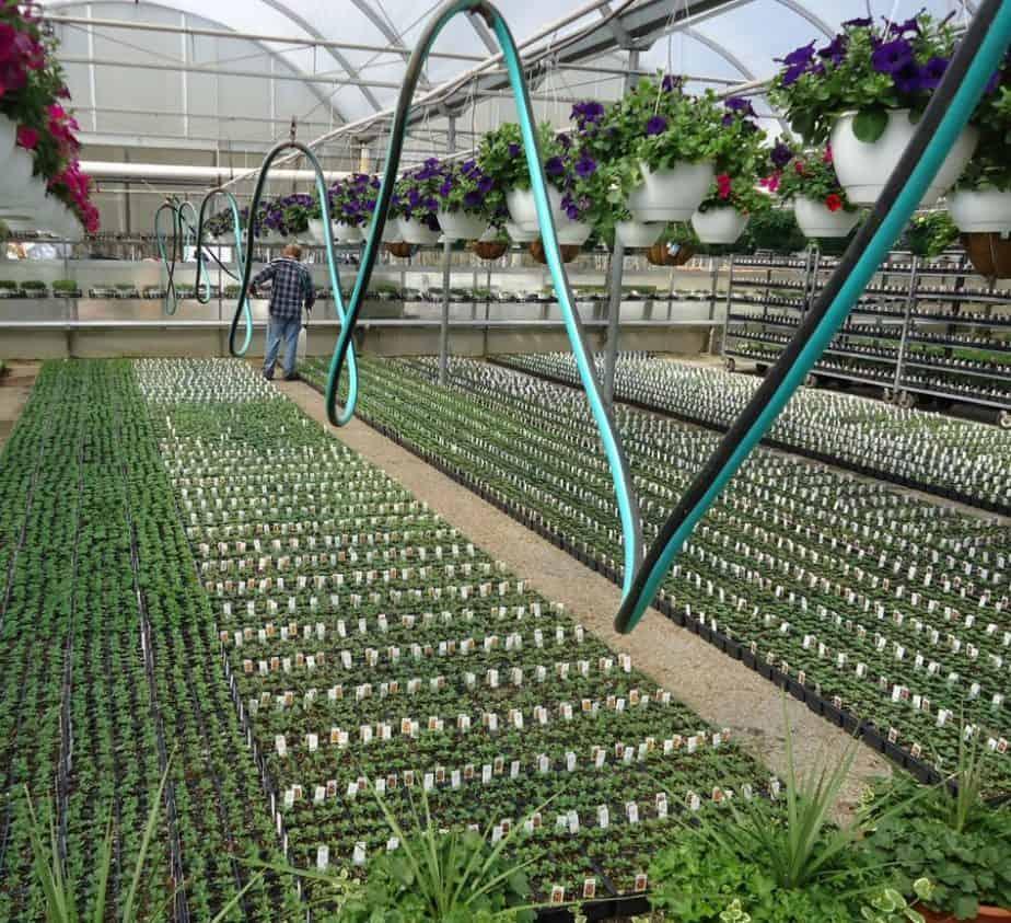Best Greenhouse Hoses
