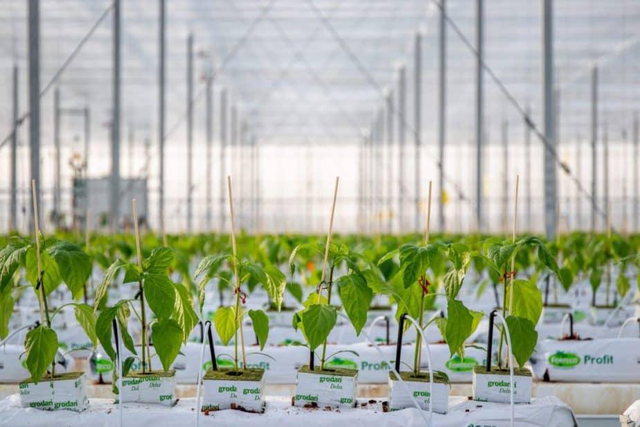 Top 10 Beginner Greenhouse Plants