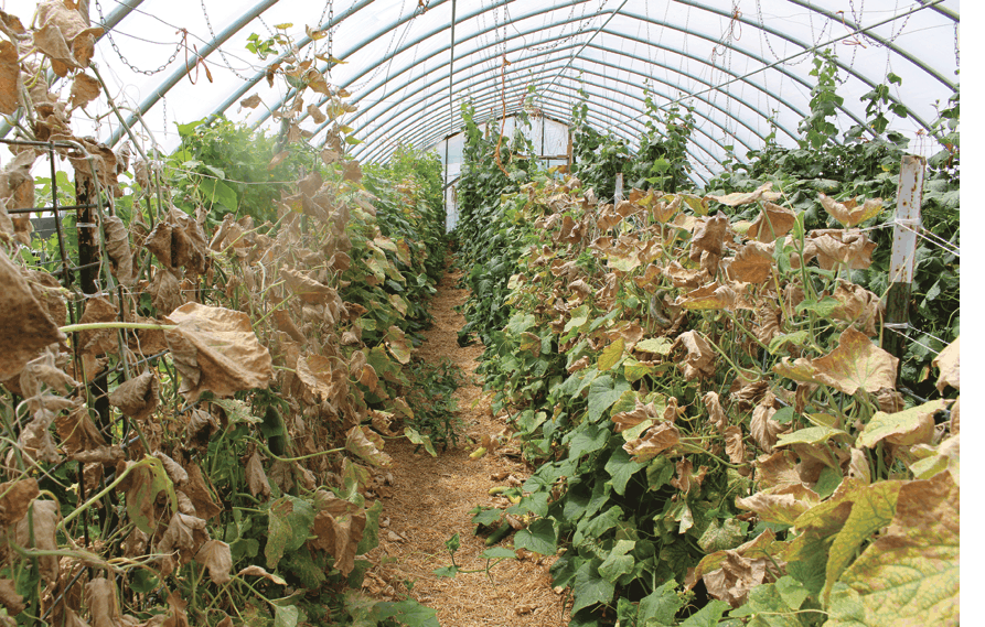 Pest Pressure greenhouses