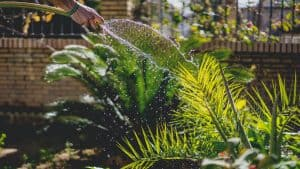 Read more about the article The 3 Best Greenhouse Hoses in 2021