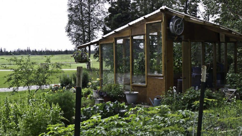 Tips for Buying a Greenhouse