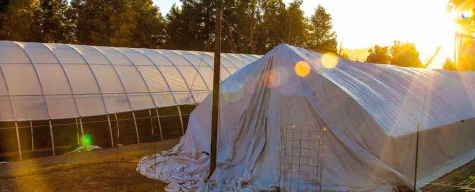Why use Light Deprivation in your Greenhouse?