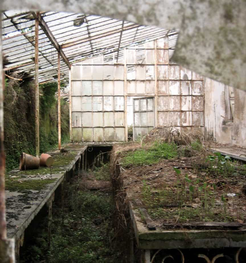 How to Maintain a Greenhouse