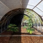 Greenhouse Light Deprivation in 2021