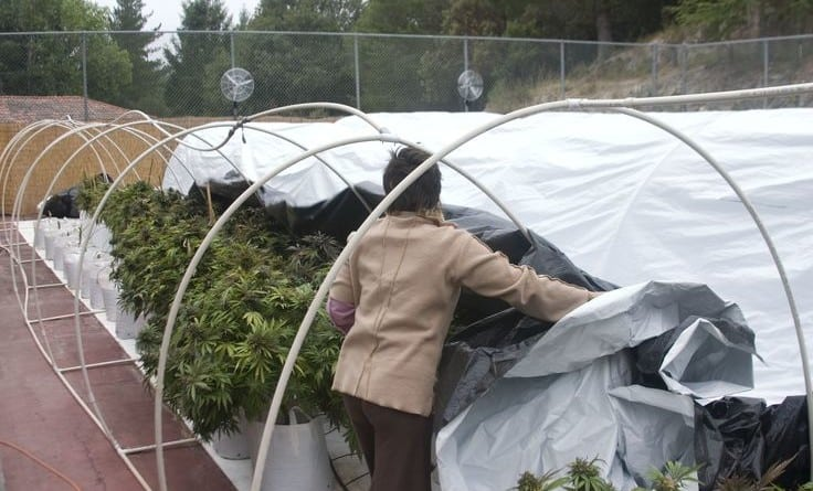 Light Deprivation with Hoop Houses
