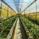 How to Set Up a Greenhouse Kit for Beginners