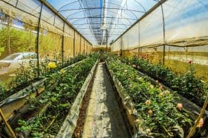 Read more about the article How to Set Up a Greenhouse Kit for Beginners
