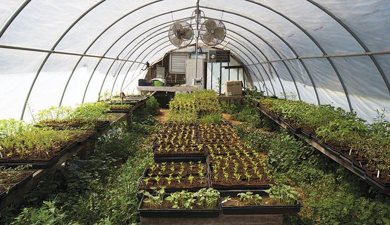 Greenhouse Maintenance Guide