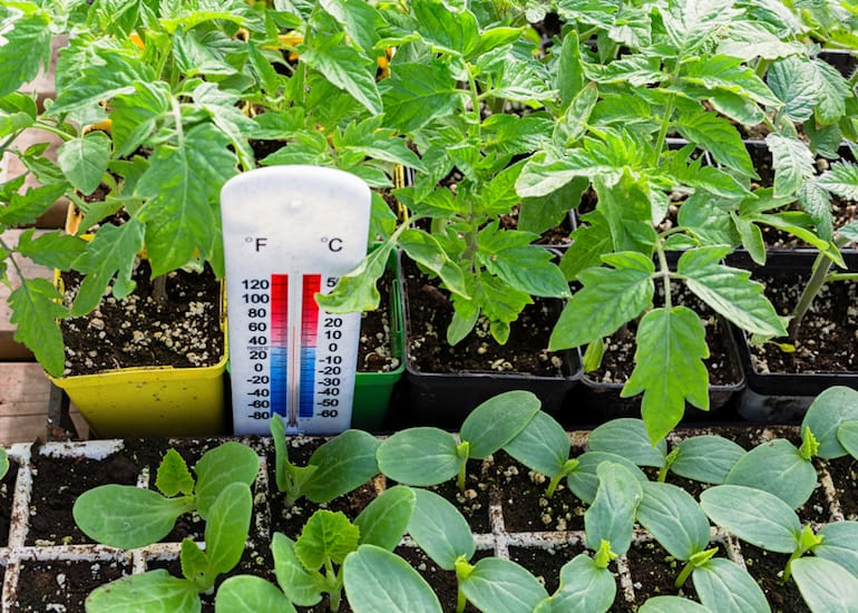 What Temperature Should A Greenhouse Be?