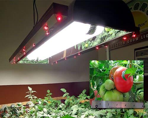 Induction Lighting greenhouse