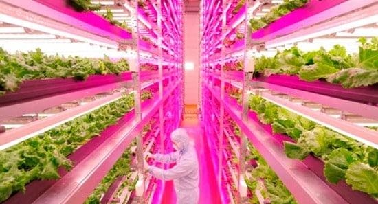 led light greenhouse