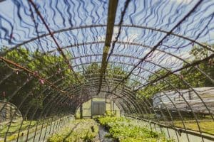 Guide to the Best Rebar Greenhouse Plans