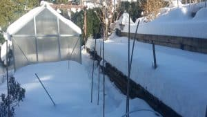 Read more about the article Guide to the Best Greenhouse Crops for Winter