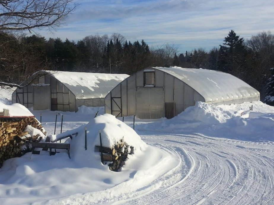best Do You Know Other Winter Greenhouse Crops?